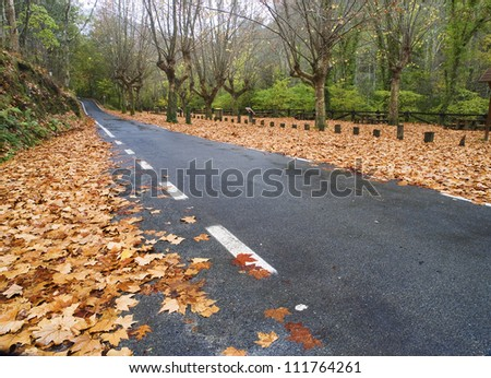 Road in autumn on a rainy day - stock photo