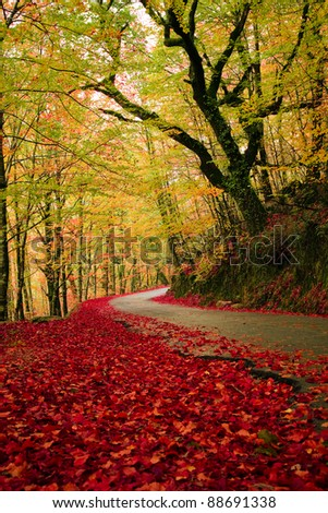 Road in autumn wood at Mata da Albergaria, Geres National Park, Portugal - stock photo