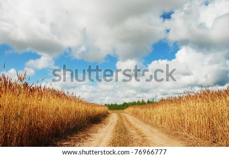 Road in barley field - stock photo