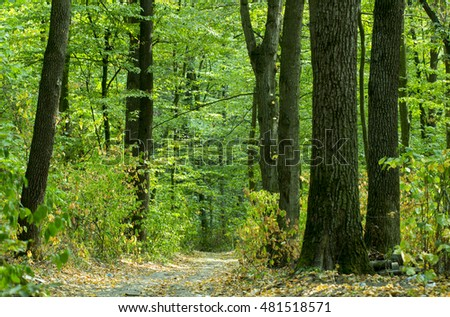 Road in deep forest. Nature landscape background.