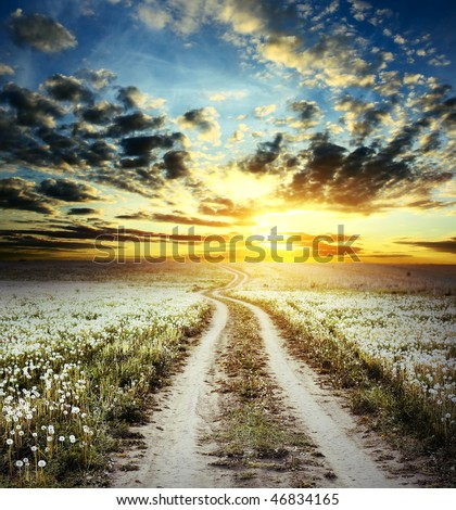 Road in field with dandelions under cloudy sunset light - stock photo