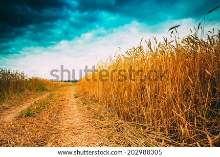 Road In Field With Ripe Wheat And Blue Sky With Clouds. Instant photo - stock photo