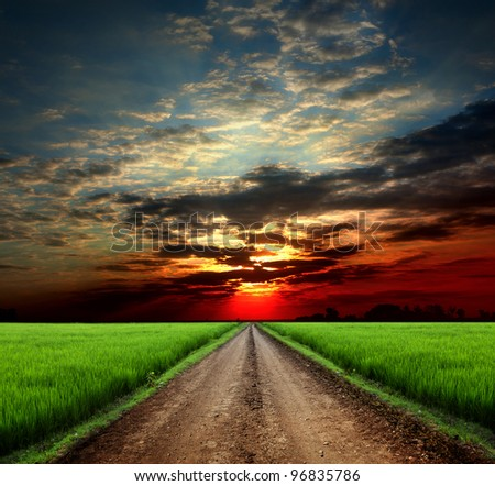 Road in field with ripe yellow wheat - stock photo