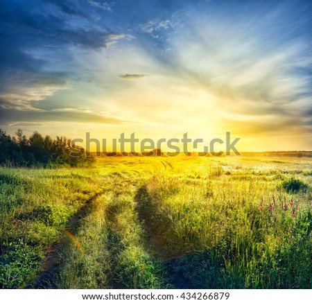 Road in field with thick grass at sunset