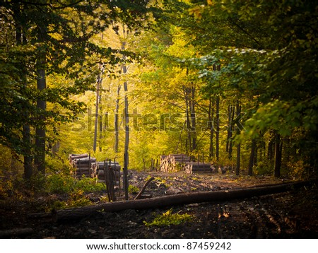 Road in forest in autumn - stock photo