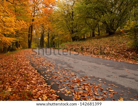 Road in forest in autumn - Sweden - stock photo
