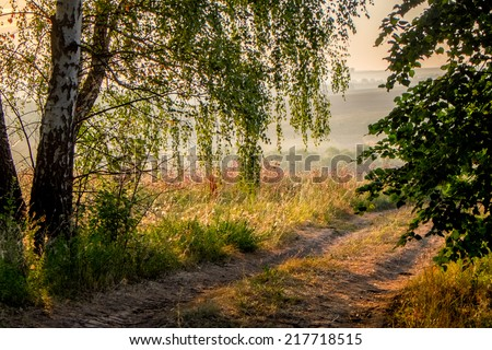 Road in forest in Russia. - stock photo