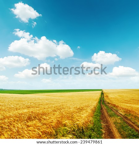 road in golden field with harvest under blue sky with clouds - stock photo