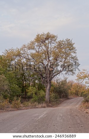 Road in Kruger Park - stock photo