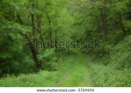 Road in Leizaran Valley, Spain - stock photo