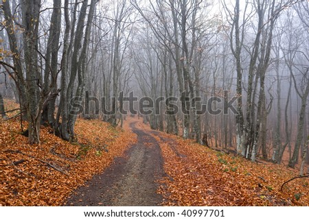road in misty autumn forest