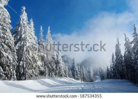 Road in mountain full of snow with firs - stock photo