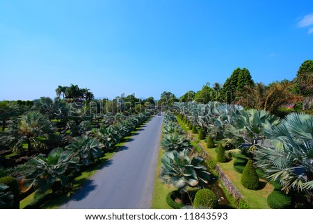 Road in Palm garden, Thailand in sunny summer day - stock photo