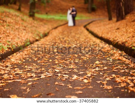Road in park covered by dry leafs - stock photo