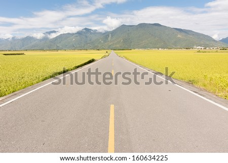 Road in rural with yellow paddy farm in Taiwan, Asia.