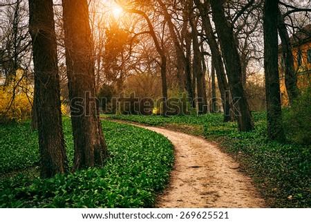 Road in spring park - stock photo