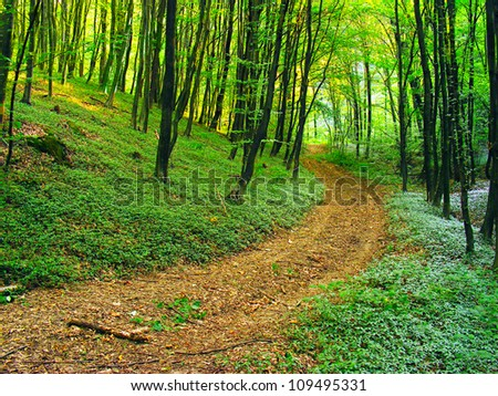 Road in summer forest. - stock photo