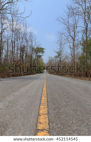 road in teak forest with dry tree