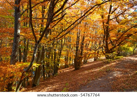 Road in the autumn forest with yellow trees
