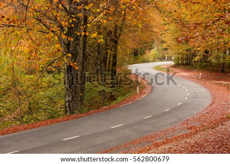 Road in the autumnal forest in Slovenia