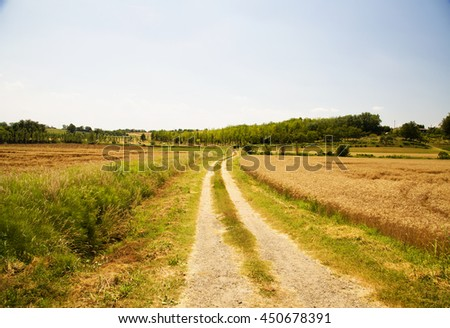 Road in the fields under blue sky, horizontal image - stock photo