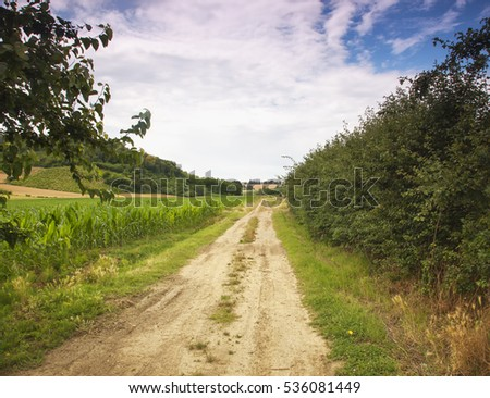Road in the fields, with trees, horizontal image