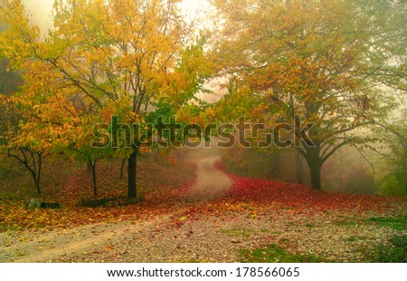 Road in the foggy autumnal forest - stock photo