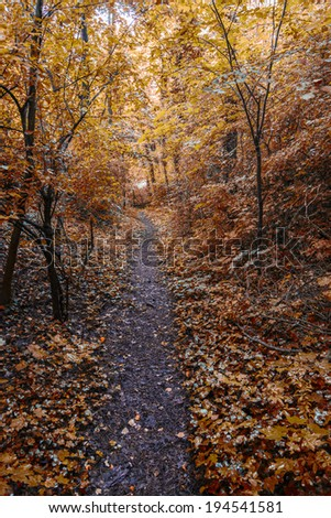 road in the forest autumn time  - stock photo