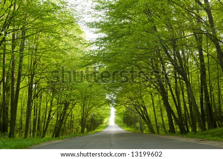 Road in the forest - fresh spring leaves on trees.