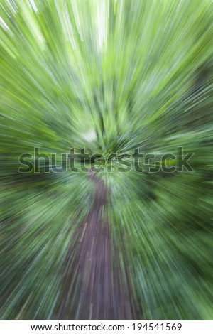 road in the green forest ,abstract nature forest  - stock photo
