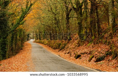 Road in the heart of the Ribeira Sacra, Ourense, Spain