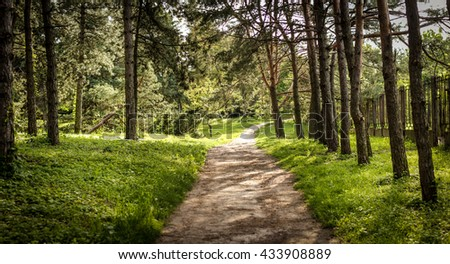 road in the park garden forest wood among the trees nature landscape
