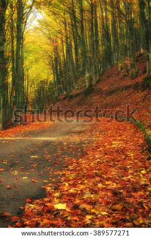 Road in the park in autumn in Italy - stock photo