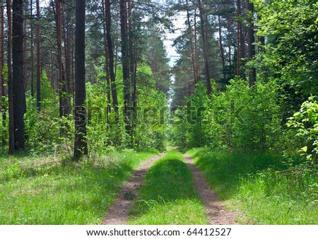 road in the woods - stock photo