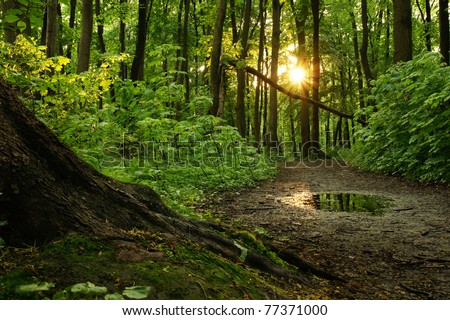 Road in the woods in the evening after the rain - stock photo