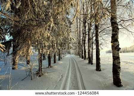 road in winter forest, trails
