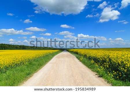 Road in yellow rapeseed flower field and blue sky