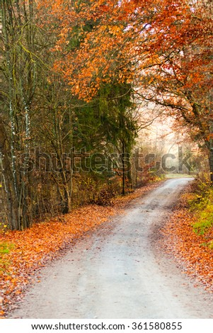 Road into autumn forest - stock photo