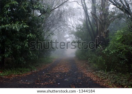 Road into the mist - stock photo
