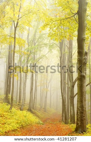 Road leading along the beech trees in the picturesque autumnal forest in the mountains. - stock photo