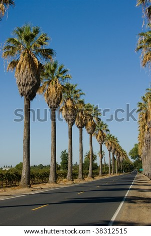 Road lined in Palm Trees in California - stock photo