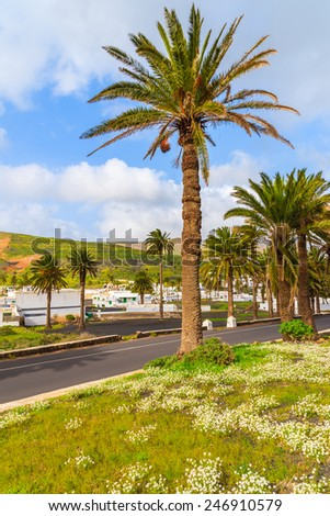 Road lined with palm trees to Haria mountain village, Lanzarote, Canary Islands, Spain  - stock photo