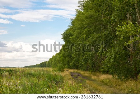 road near the forest plantation - stock photo