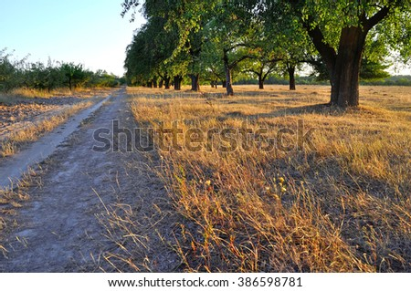 road near trees in the rays - stock photo