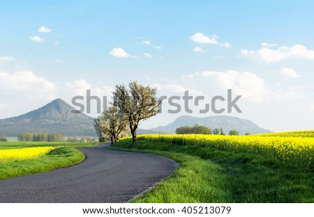 Road next to canola field, Hungary