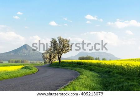 Road next to canola field, Hungary - stock photo