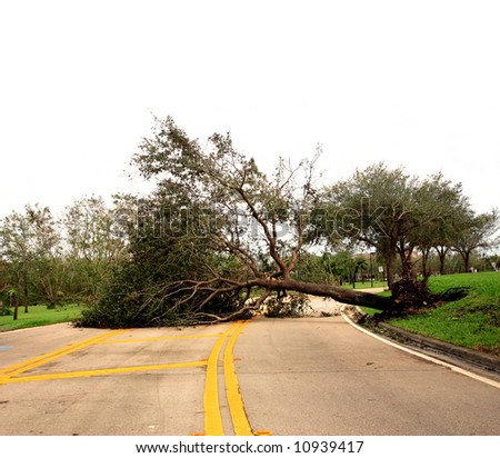 Road obstructed by fallen tree damaged by wind storm [isolated on white sky]. - stock photo