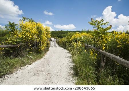 Road of Colli Euganei - stock photo