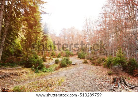 Road on forest with stump and evergreen trees in autumn