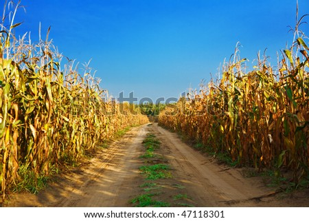 road on the cornfield - stock photo